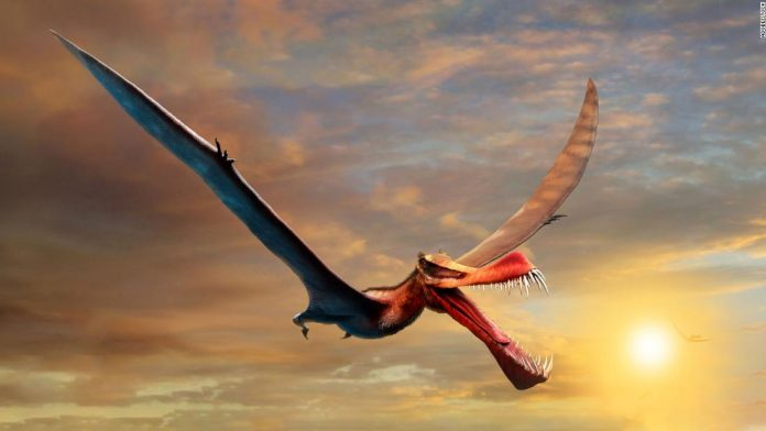 This terrifying 'dragon' was Australia's largest flying reptile
